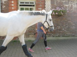 Wembley on her way to Di Lampard for a couple of weeks introduction back to jumping